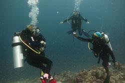 BD-150424-Maldives-8093-Homo-sapiens.-Linnaeus.-1758-[Diver].jpg